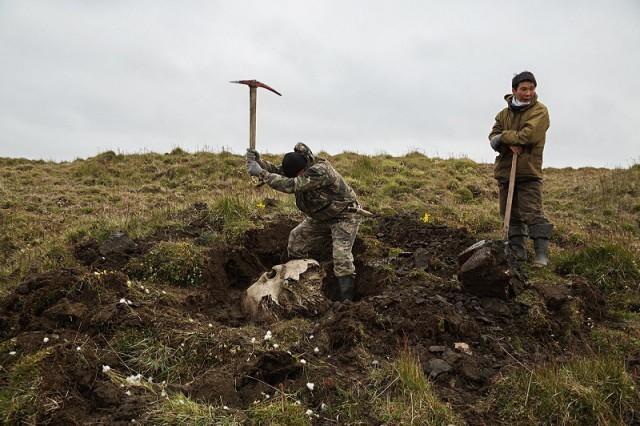 开采存放在西伯利亚的猛犸象牙原料。